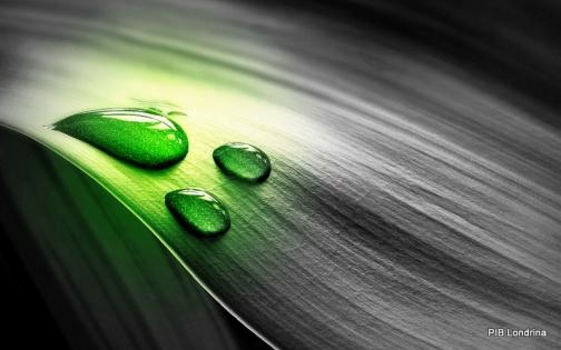 water-drops-73178