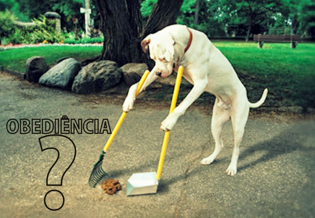Train Your Dog  dog poop scoop